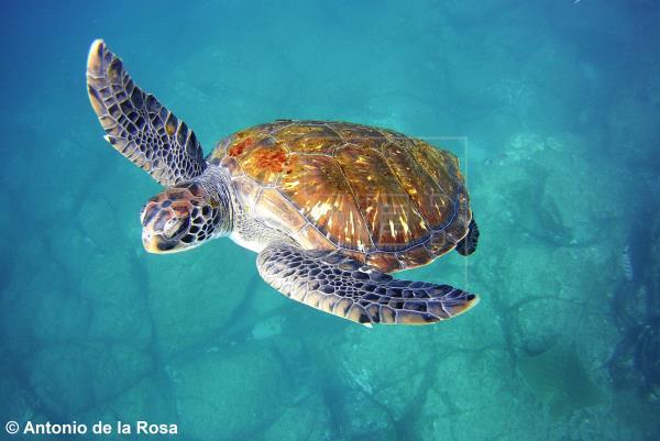 Un catálogo oceanográfico identifica 1.700 especies en dos espacios protegidos de Lanzarote y Fuerteventura