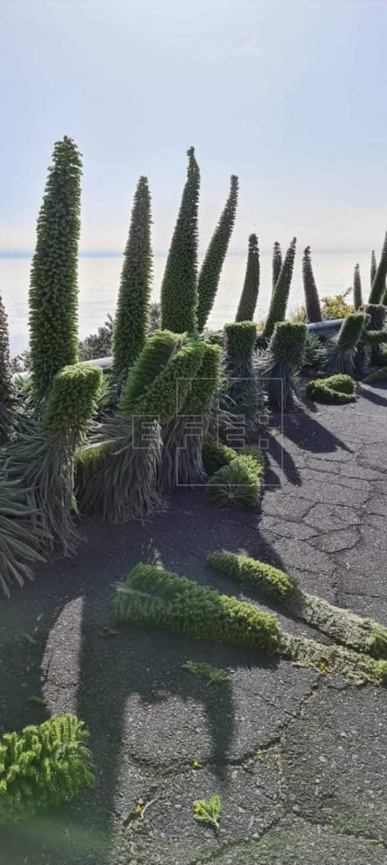 El Cabildo de La Palma investigará un acto vandálico contra tajinastes